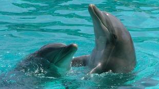 Delfin cudotwórca sam się wyleczy