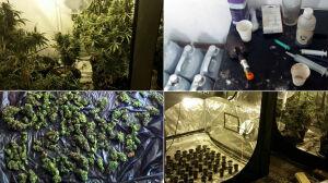 Czteropiętrowa plantacja marihuany. Narkotyki warte 300 tysięcy zł